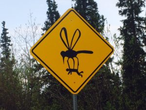 mosquito carrying person
